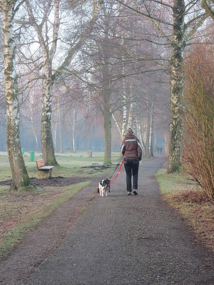 laufen-mit-hunden-am-morgen