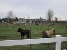 'My little ponies'