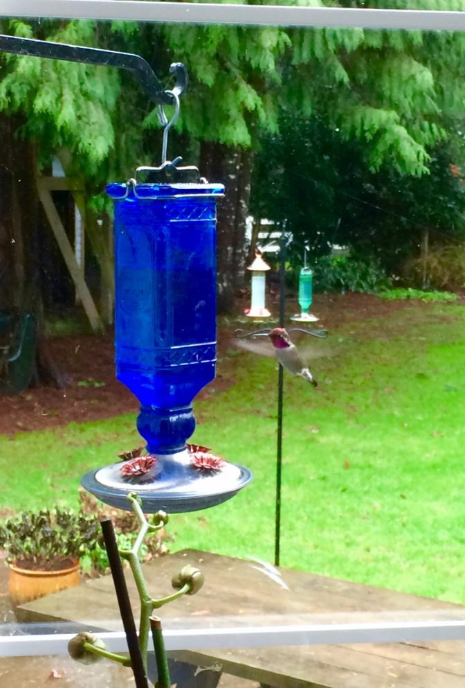 'Breakfast for one (Hummingbird).'