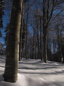 Faggeta in Val de le moneghe_01