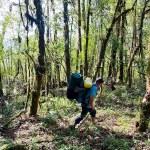 7. Passaggio nella foresta (ph E. Ferri – K2014.it)