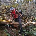 15. Passaggio nella foresta (ph E. Ferri – K2014.it)