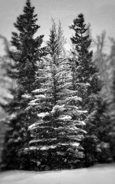 trees.1262