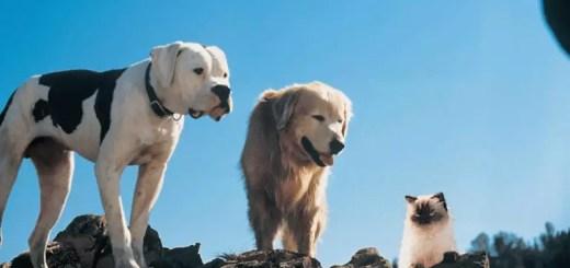 Filmy o psach dla dzieci - Niezwykła podróż