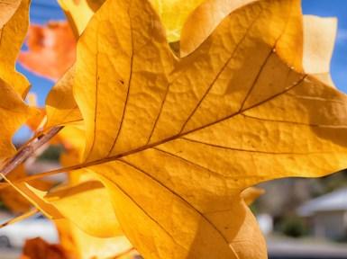 Bright Autumn--122
