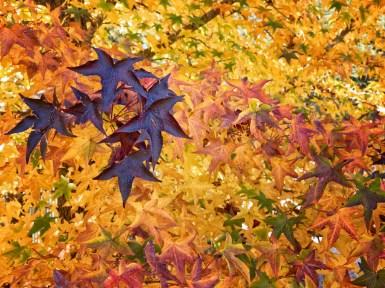 Bright Autumn--124