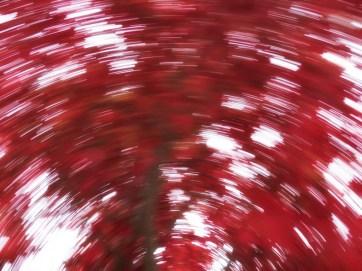 Bright Autumn--70