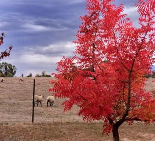 Bright Autumn--74