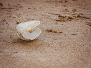 a large white clam shell on sand