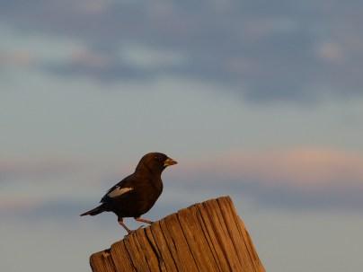 Bird on post 2