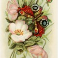 free vintage clipart, antique birthday greetings postcard, postcard 1910, flowers butterfly vintage image, old postcard