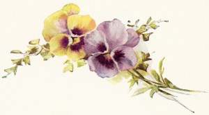 floral vintage illustration, free printable flowers, free vintage clipart flower, yellow and purple pansies vintage image