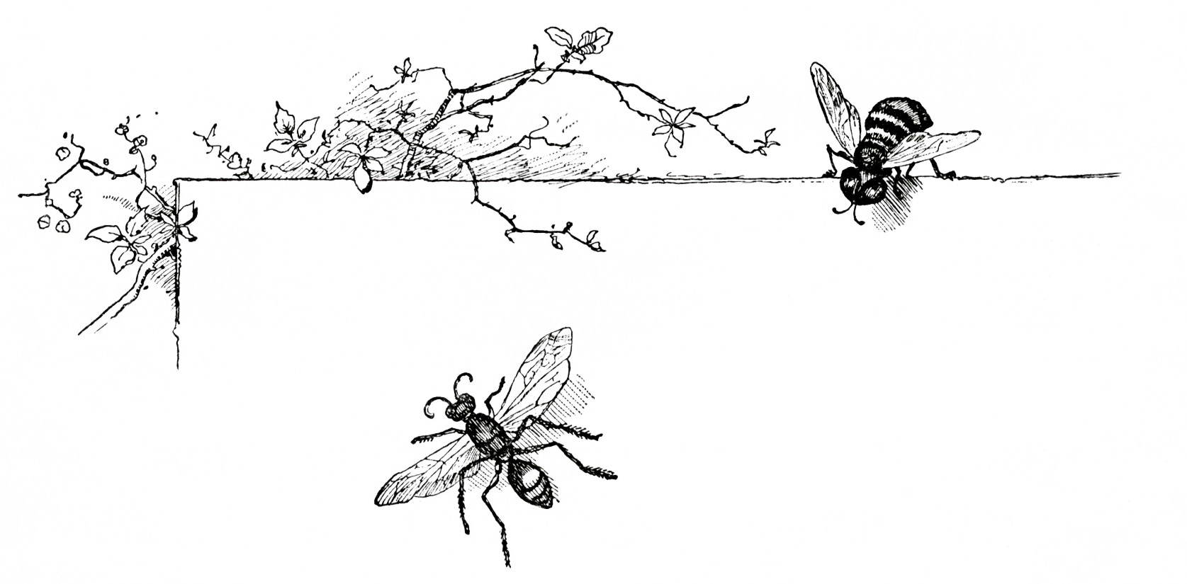 Free Vintage Clip Art Wasp And Bee