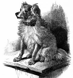 free vintage printable dog image dog sketch vintage dog illustration free clipart dog [ 1068 x 1187 Pixel ]
