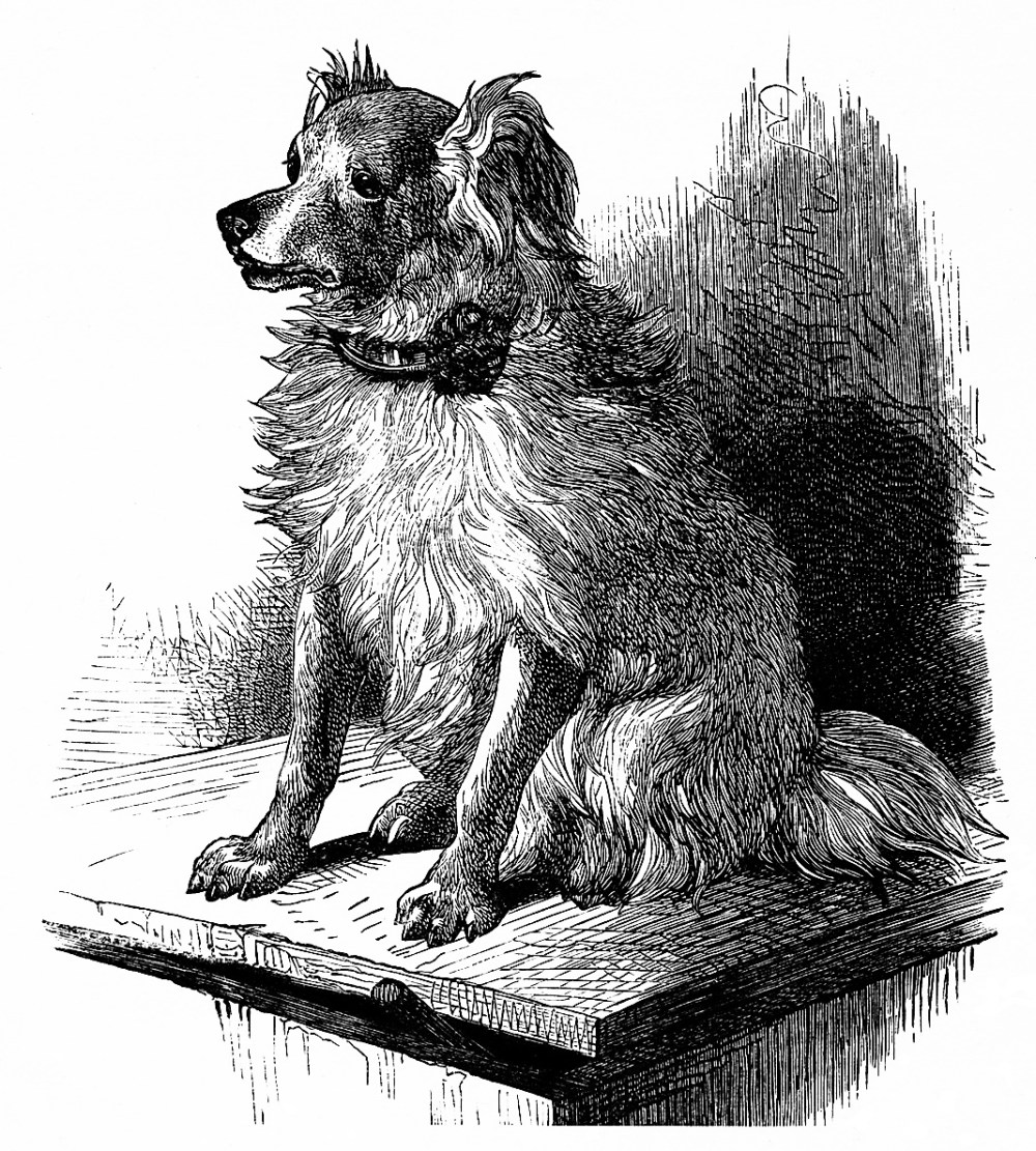 medium resolution of  free vintage printable dog image dog sketch vintage dog illustration free clipart dog