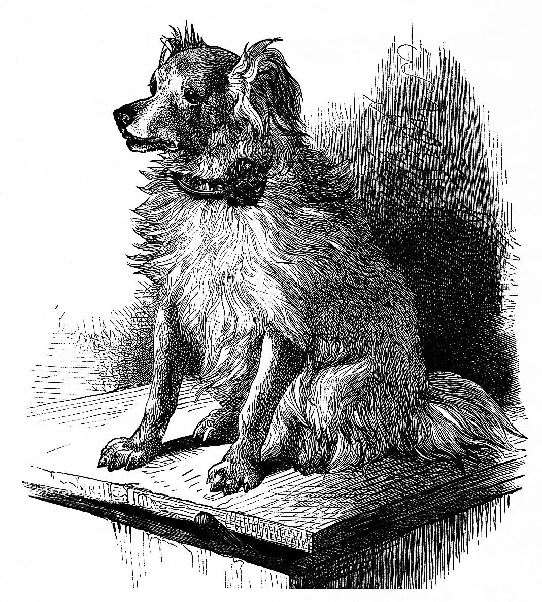 hight resolution of  free vintage printable dog image dog sketch vintage dog illustration free clipart dog