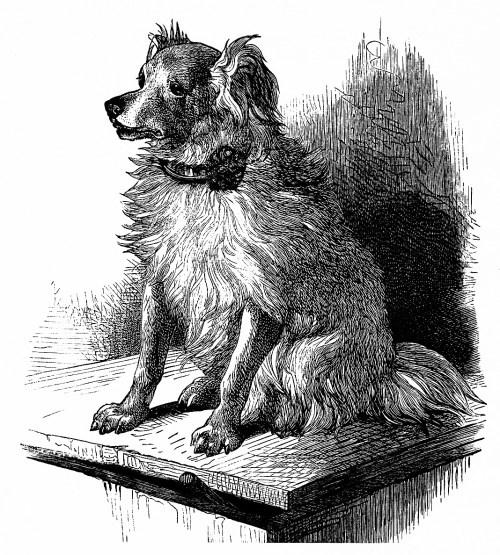 small resolution of  free vintage printable dog image dog sketch vintage dog illustration free clipart dog
