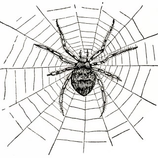 Spider and Spiderweb ~ Free Vintage Clip Art