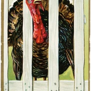 Tuck's Thanksgiving Turkey Postcard