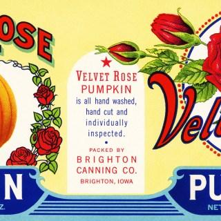 Velvet Rose Pumpkin Label ~ Free Graphic