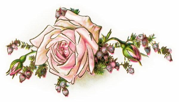 free vintage clip art pink rose