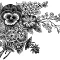 vintage magazine ad, flower seeds advertisement, vintage garden clip art, black and white flowers clipart, free flower garden graphics