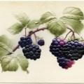 vintage berries clipart, antique fruit postcard, old postcard, free vintage graphics, blackberry clip art image