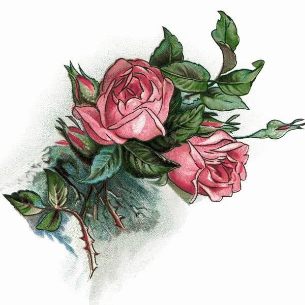 Pink Roses And Poem Vintage Clip Art - Design