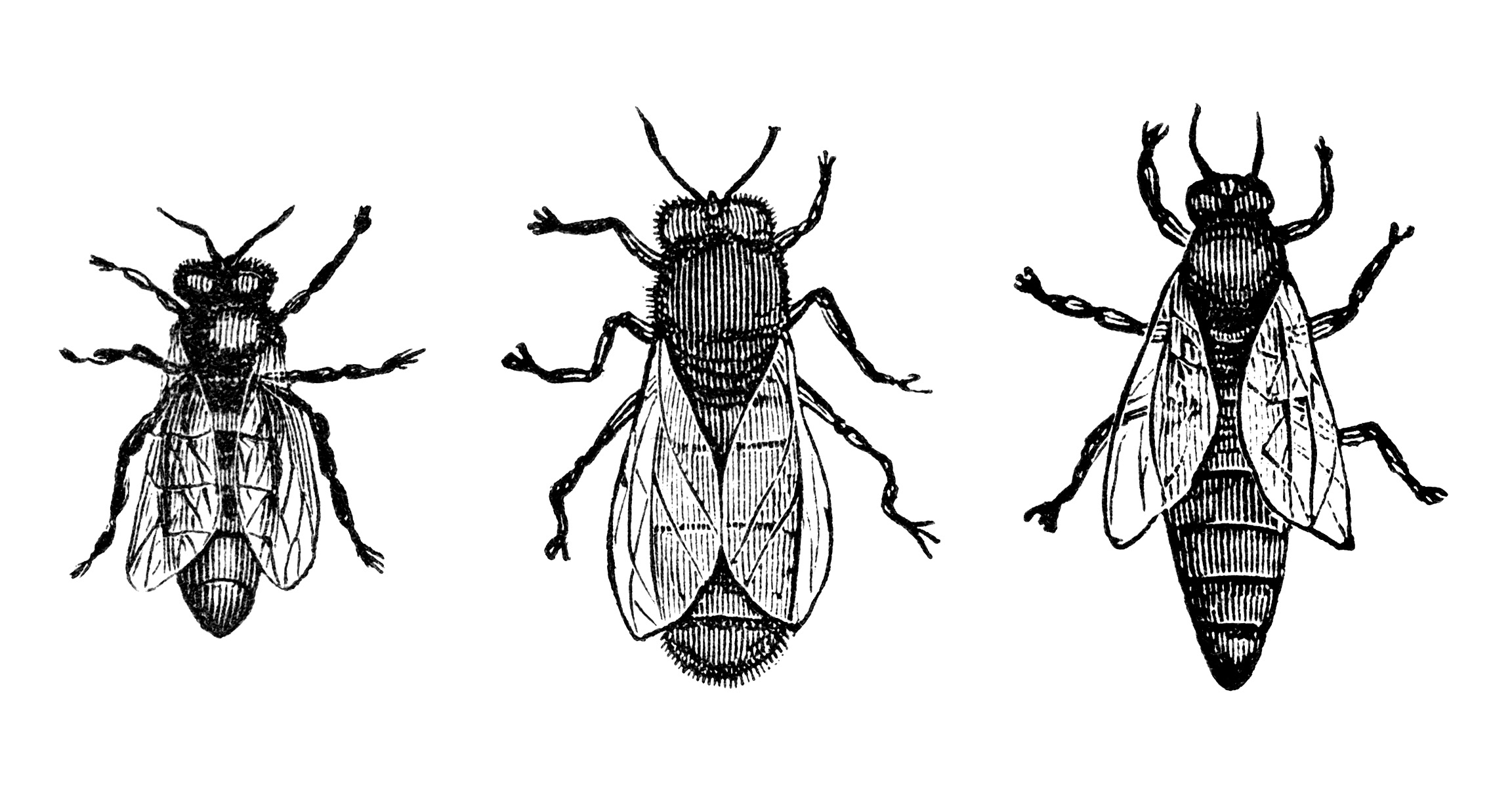 Free Bee Keeping Ad And Bee Clip Art