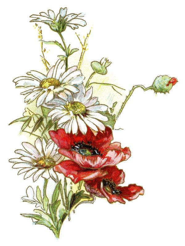 free vintage daisies