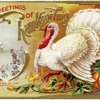 White Turkey Thanksgiving Postcard