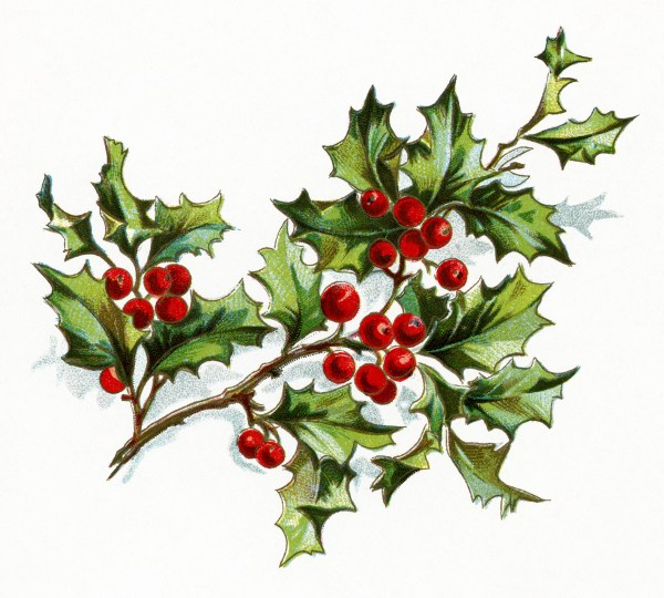 free vintage holly and berries