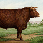 Now Available in my Etsy Shop ~ Mrs. Beeton's Prize Shorthorn