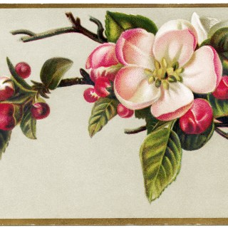 Free Vintage Image ~ Apple Blossoms Victorian Card