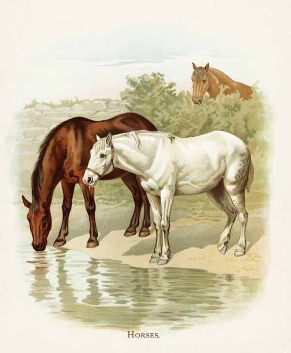 Horse Farm Illustration Vintage