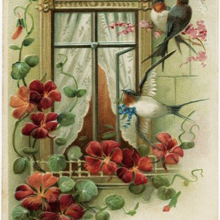 Flowers and Birds ~ Free Vintage Image