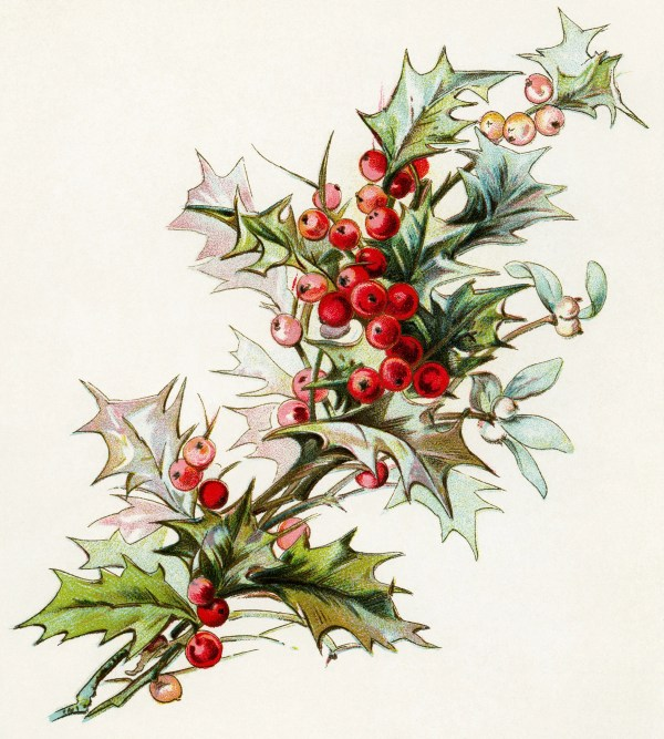 sprig of holly and berries