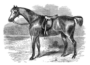 clip horse clipart graphics hack animal covert farm horses printables printable graphic olddesignshop animals print elegant cassell 1869 household circa