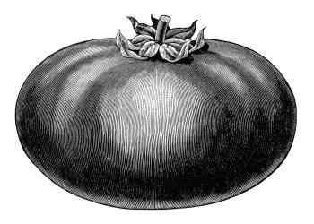 clip tomato catalogue garden vegetable clipart illustration olddesignshop printable
