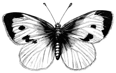 Printable Butterfly Clipart Black And White