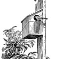 vintage bird clip art, black and white clipart, birdhouse illustration, free vintage bird graphics