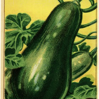 Squash French Seed Label ~ Free Vintage Image