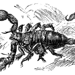 Free Vintage Scorpion Clip Art Image