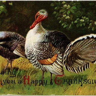 Thanksgiving Turkeys ~ Free Vintage Graphic