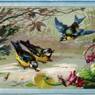 Birds in Snow Illustration