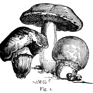 Seven Varieties of Mushrooms