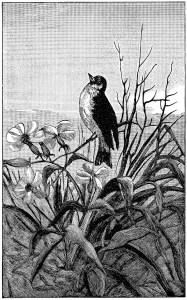 vintage bird clip art, black and white graphics, printable bird illustration, bird on branch clipart, antique nature