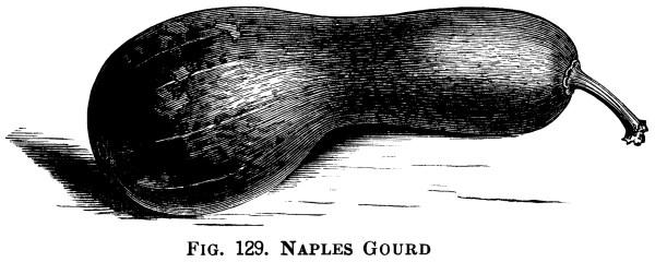 Variety Of Gourds - Design