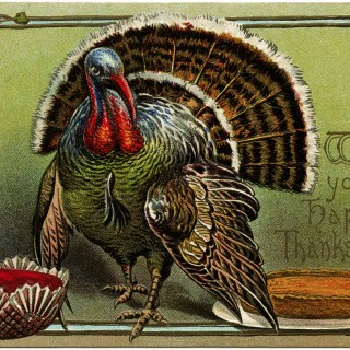 Thanksgiving Turkey Postcard