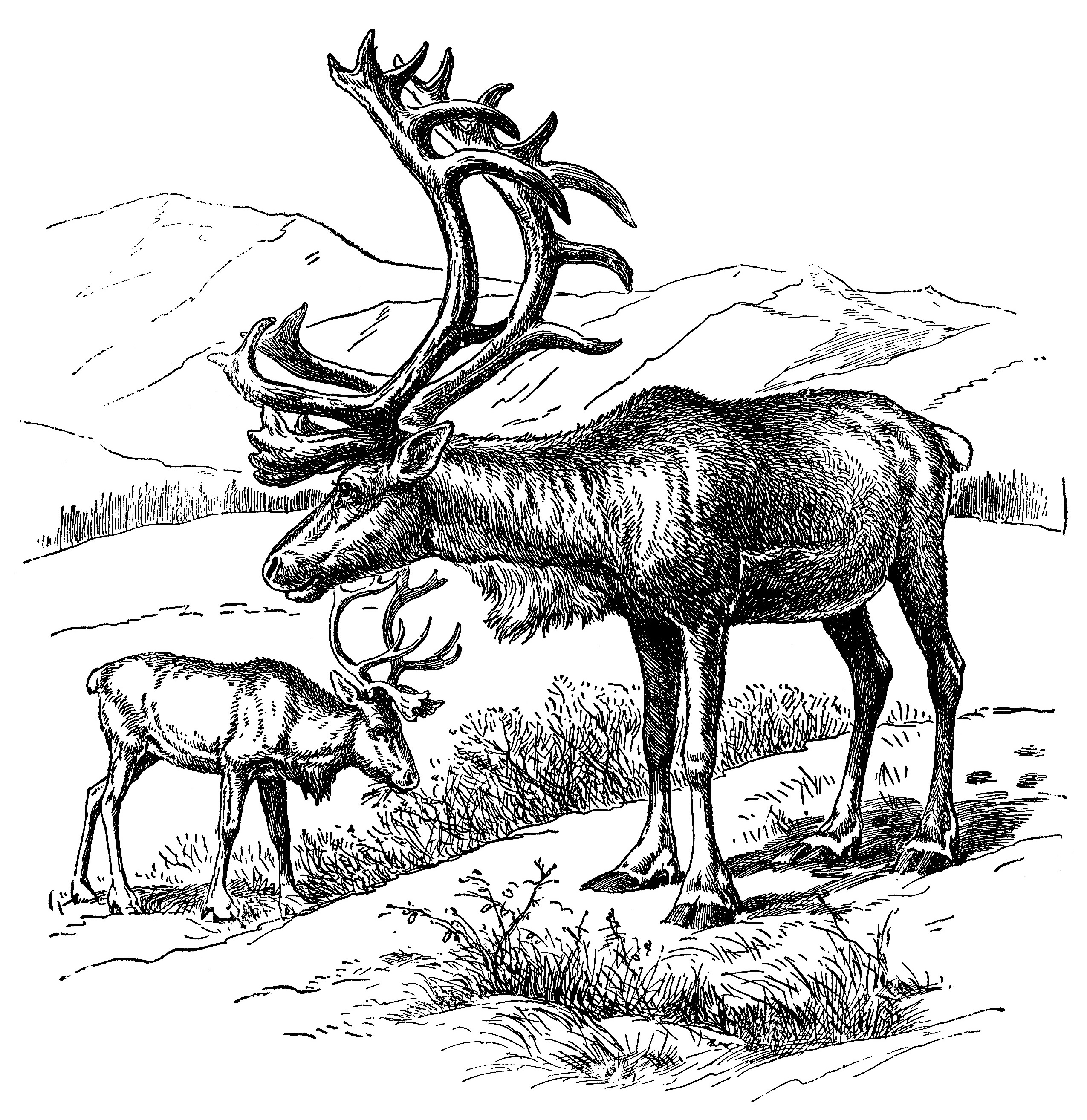 Reindeer Vintage Clip Art